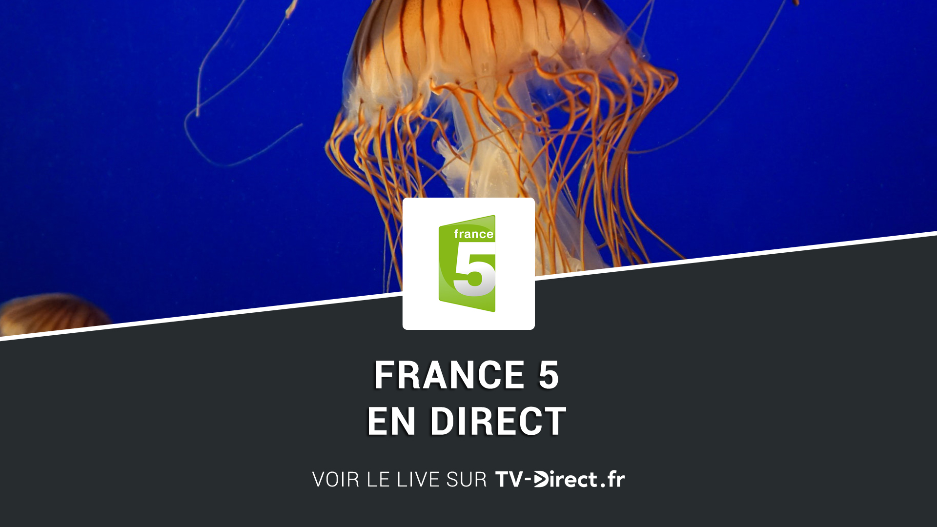 france 5 direct regarder france 5 en direct live sur internet. Black Bedroom Furniture Sets. Home Design Ideas
