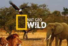 Nat geo wild gratuit